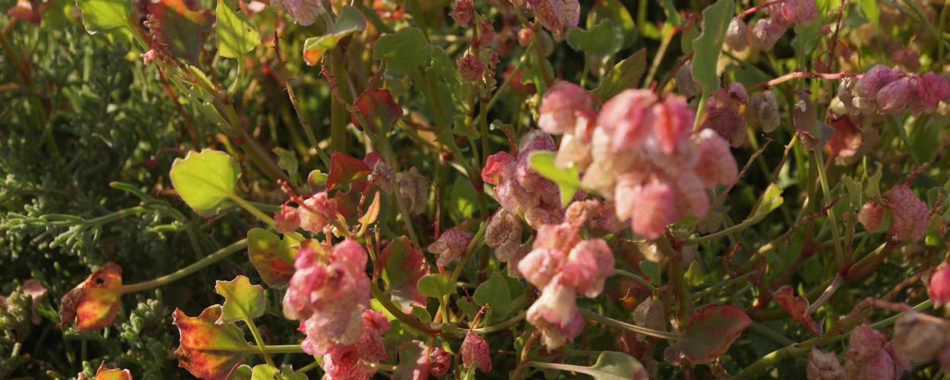 Doha flora. © Johanna Gibbons.