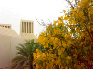 Yellow nature, Qatar University, Doha. Photo: SmSm, 2008.