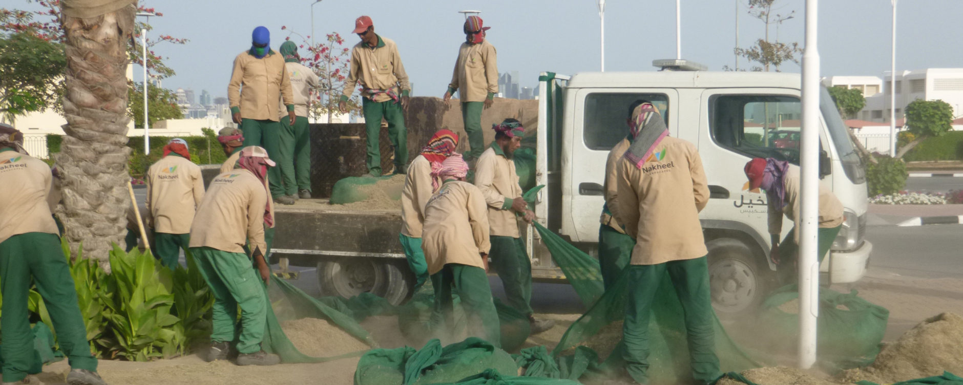 Doha landscaping crew collecting and taking grass clippings to be landfilled, protecting their lungs from the particulates with scarves. Photo © Nance Klehm.